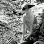 """Cadela Baleia em cena do filme """"Vidas Secas"""". Imagem: Internet."""