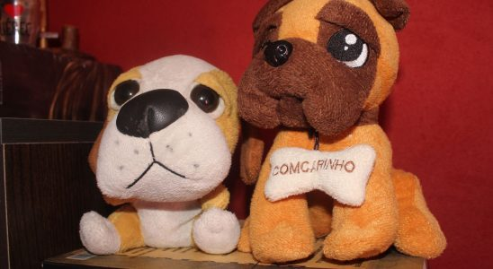 Cachorros de pelúcia. Crédito: Juh Oliveira